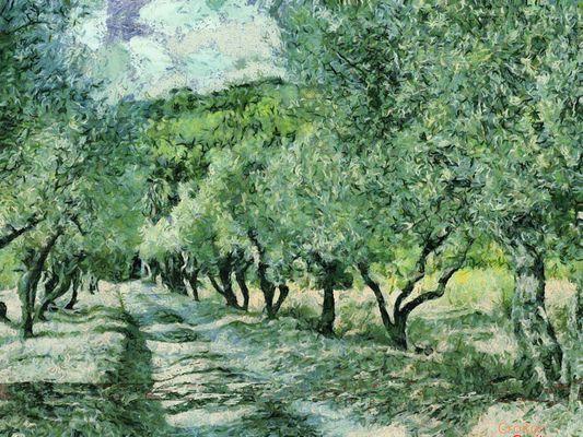 Chemins des Oliviers