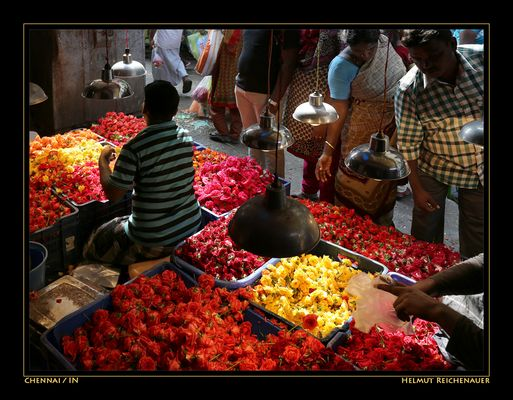 Chennai Flower Market II, Chennai, Tamil Nadu / IN