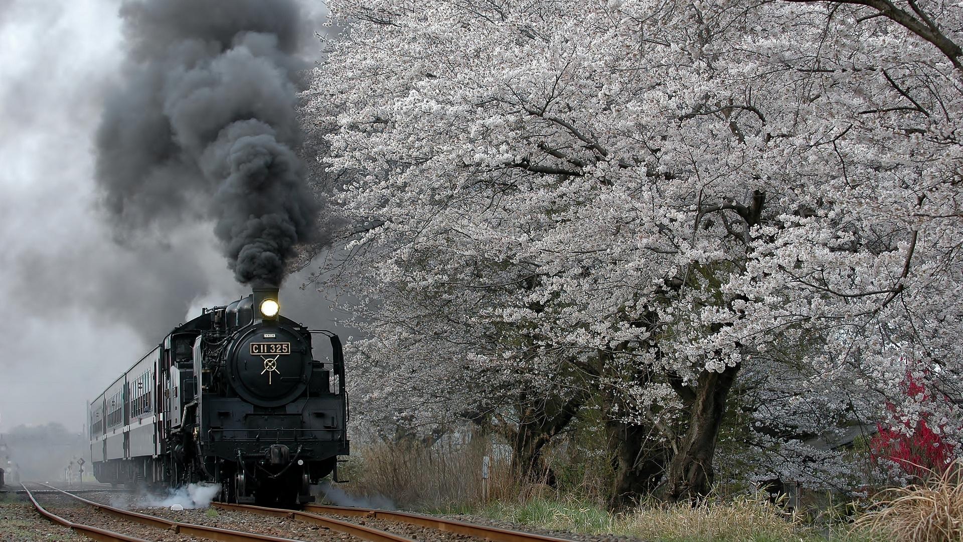 Cherry Blossom C11 325