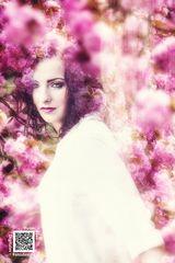 [Cherry Blossoms]