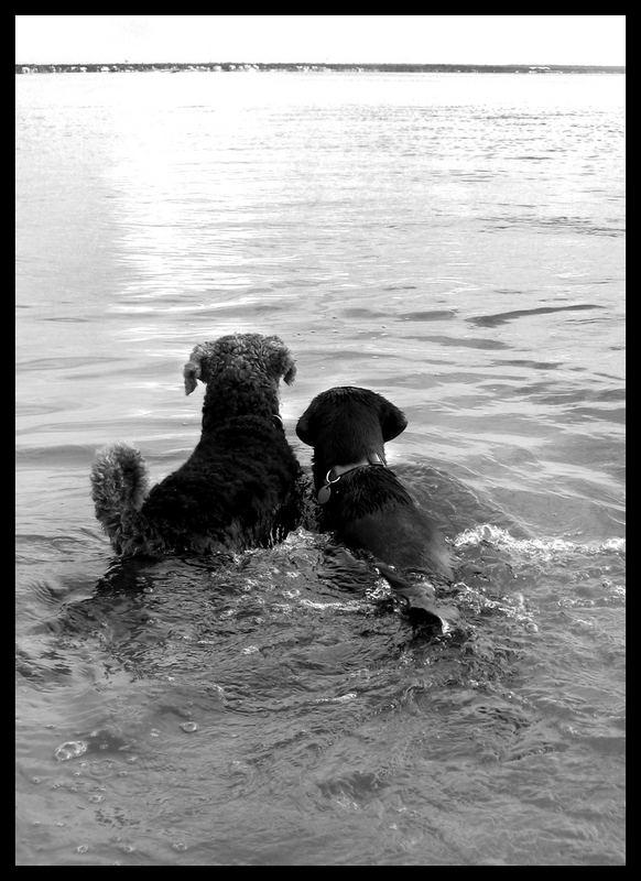 Chester und Kona