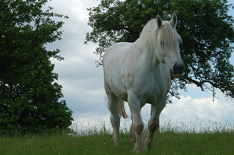 Cheval 2 !