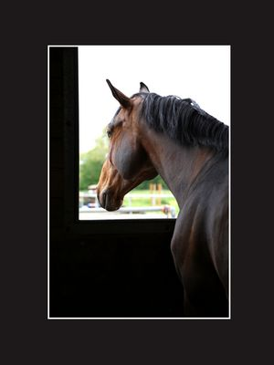 Cheval à la fenêtre
