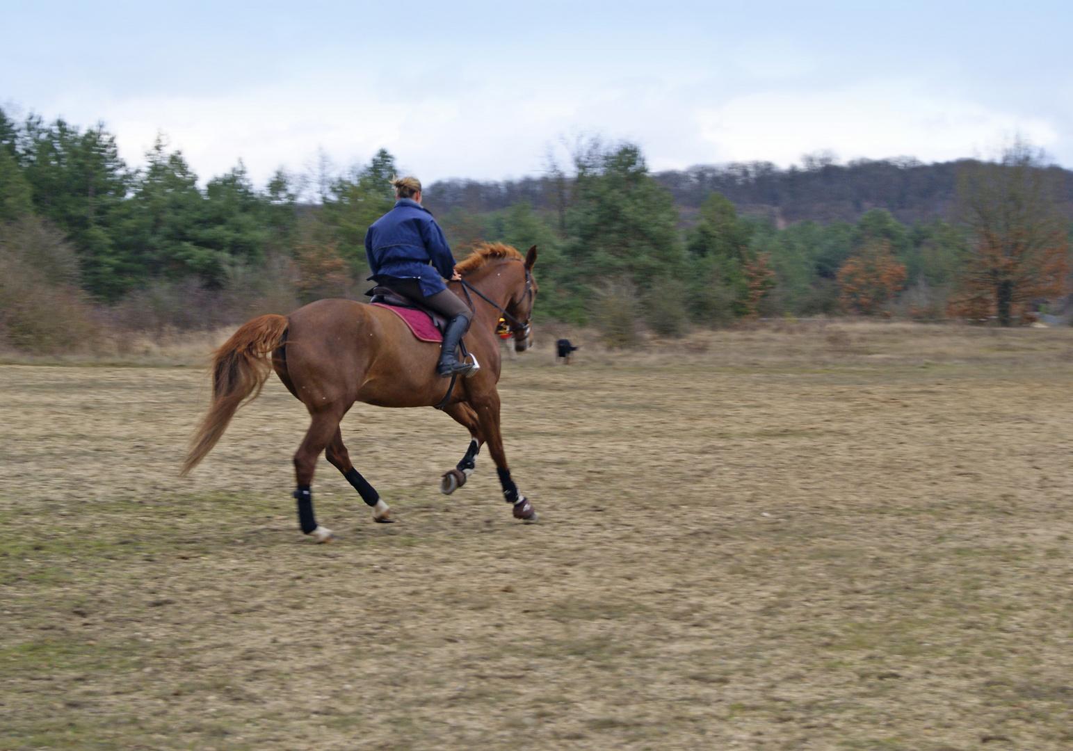 cheval à la Plaine de Chanfroy