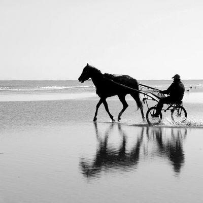 cheval à l'entrainement plage de Varaville