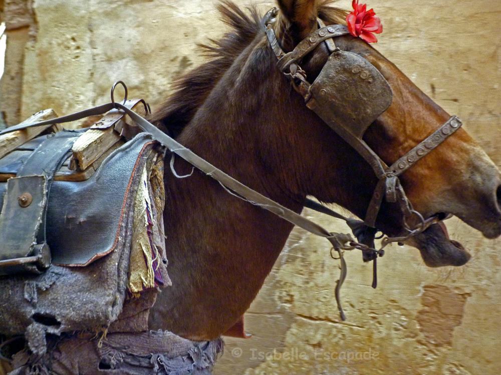 Cheval au galop dans la m dina photo et image animaux animaux domestiques les chevaux images - Comment dessiner un cheval au galop ...