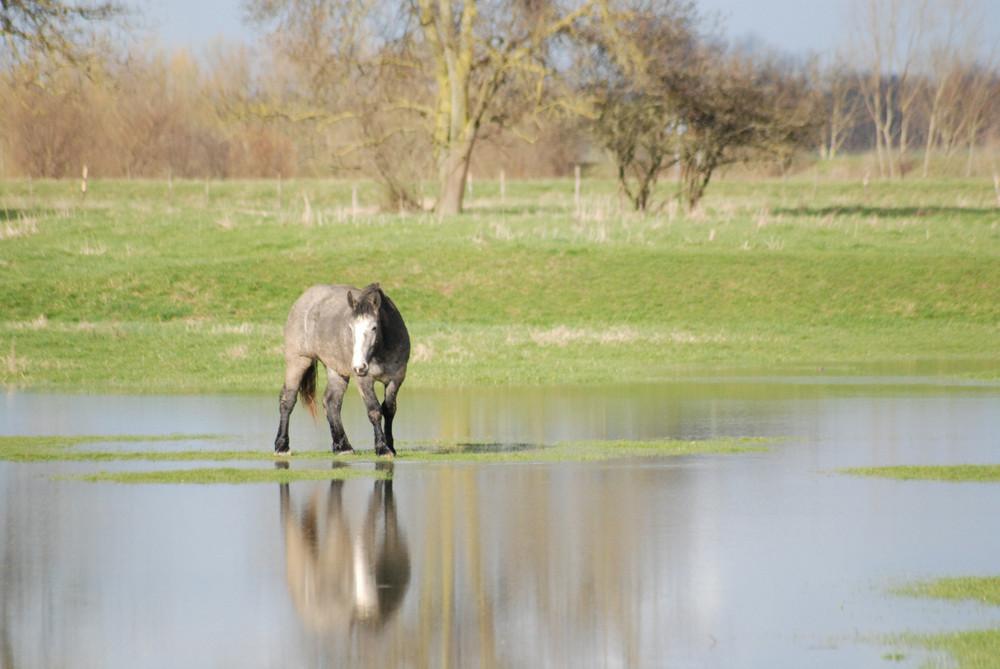 Cheval au milieu de l'eau