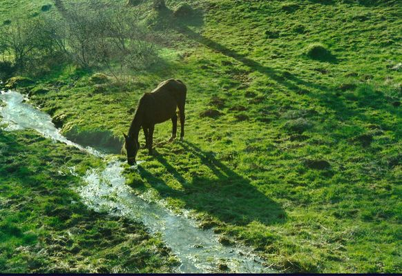 Cheval au ruisseau