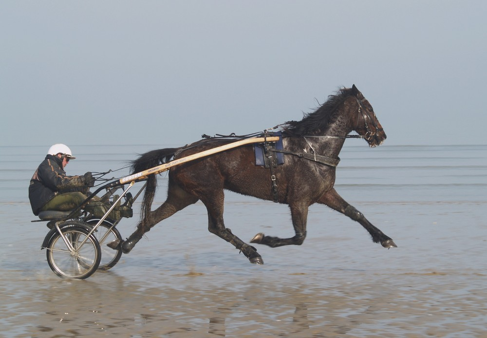 """Cheval au trot """"volant"""""""