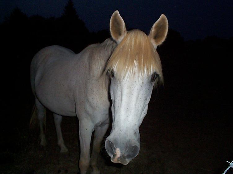 cheval blanc dans le noir