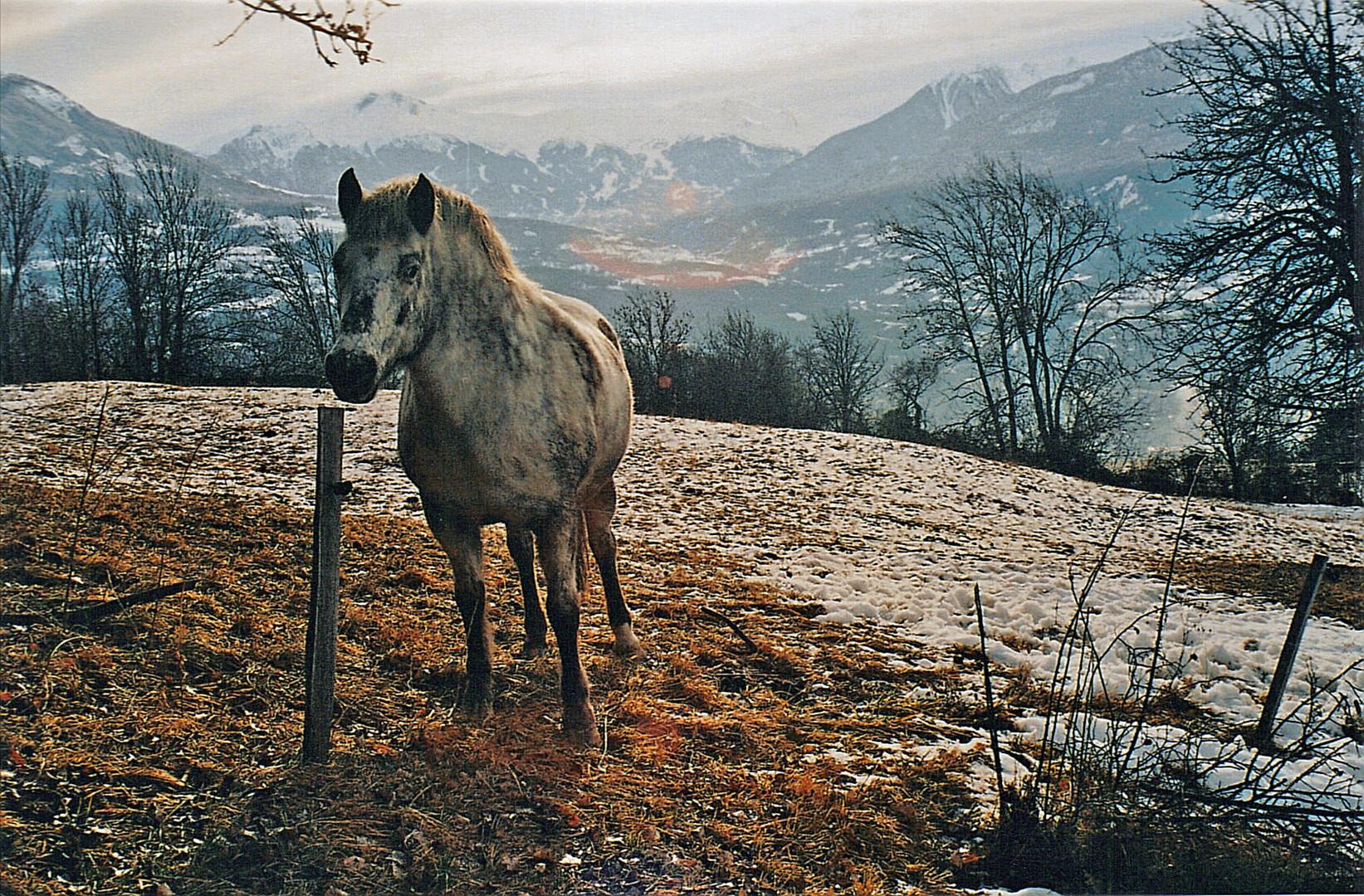 cheval dans la neige!!