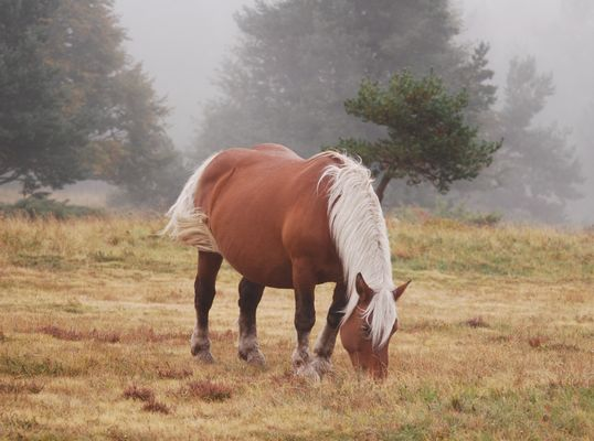 cheval dans le brouillard  en Ardèche