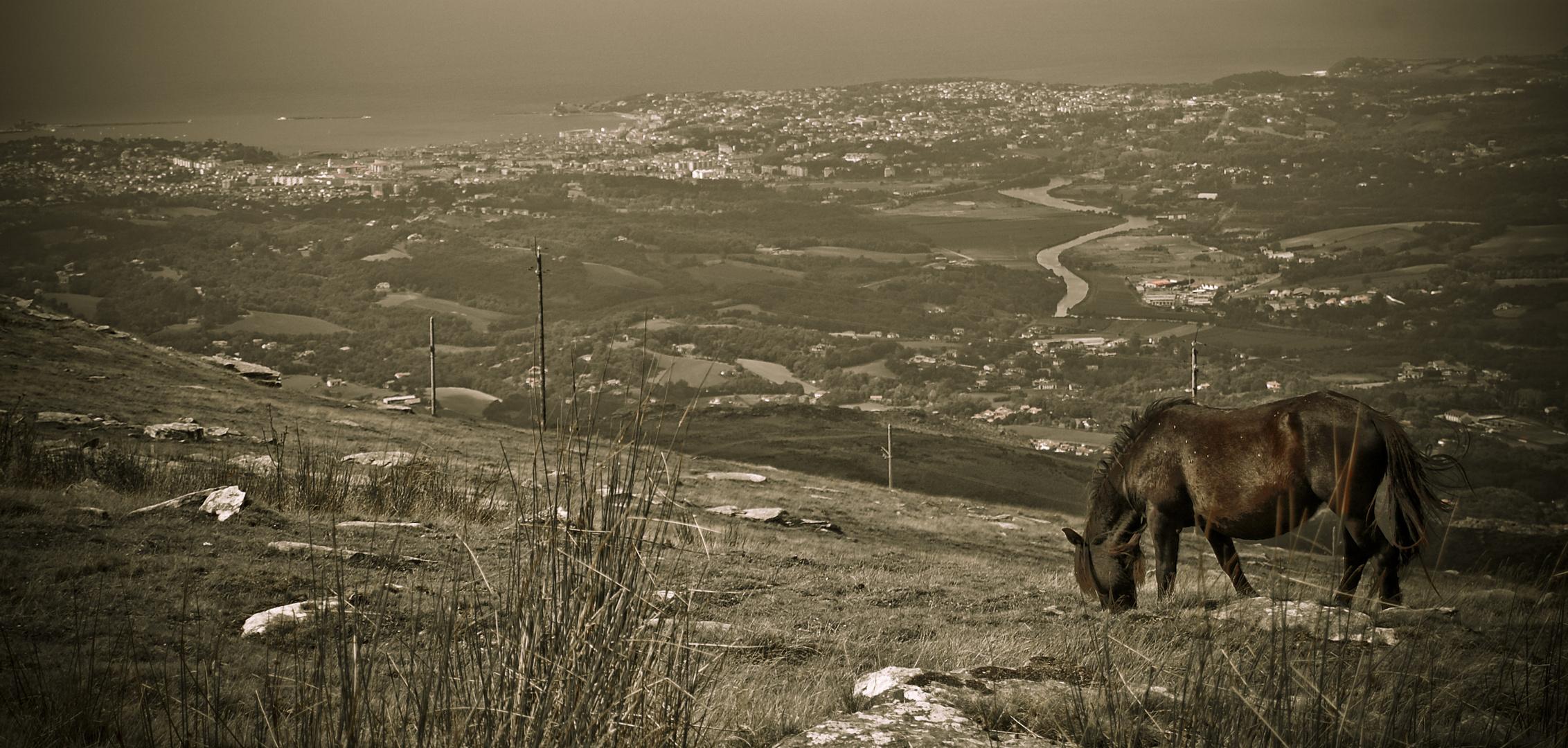 cheval de montagne