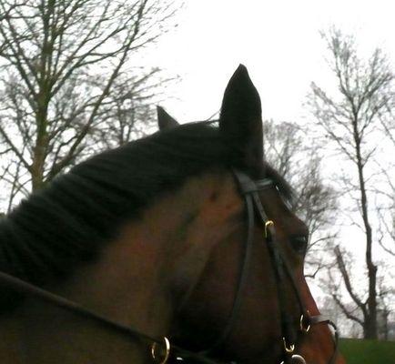 cheval et ciel
