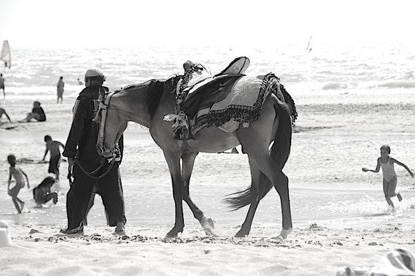 cheval noir et blanc