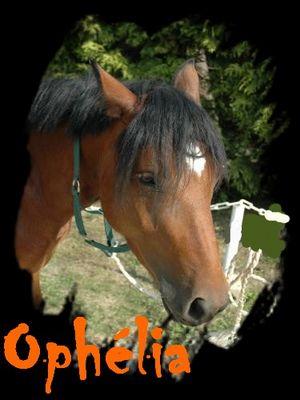 cheval ophé