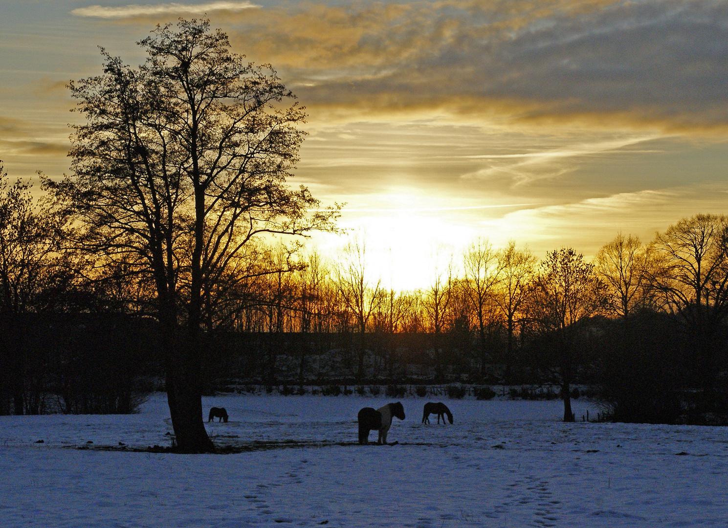 chevaux au coucher de soleil!!