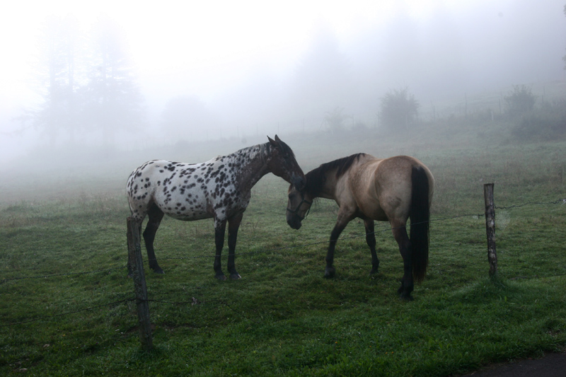 Chevaux dans la brume 2
