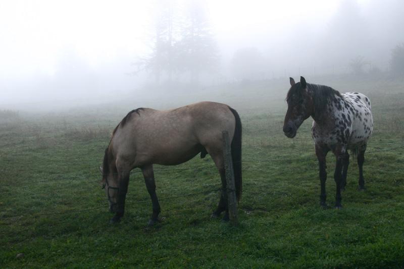 Chevaux dans la brume 3