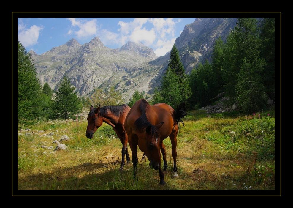 Chevaux dans la vallée de la Gordolasque