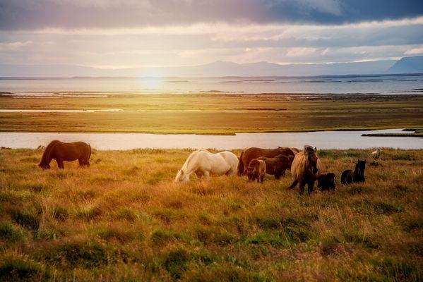 Chevaux dans le couche de soleil