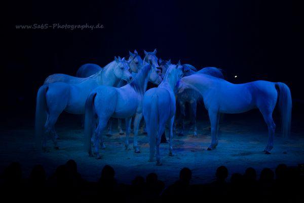 chevaux de cirque