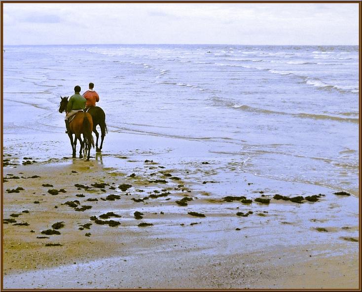 Chevaux des sables