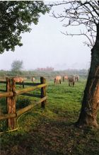 chevaux henson dans la somme