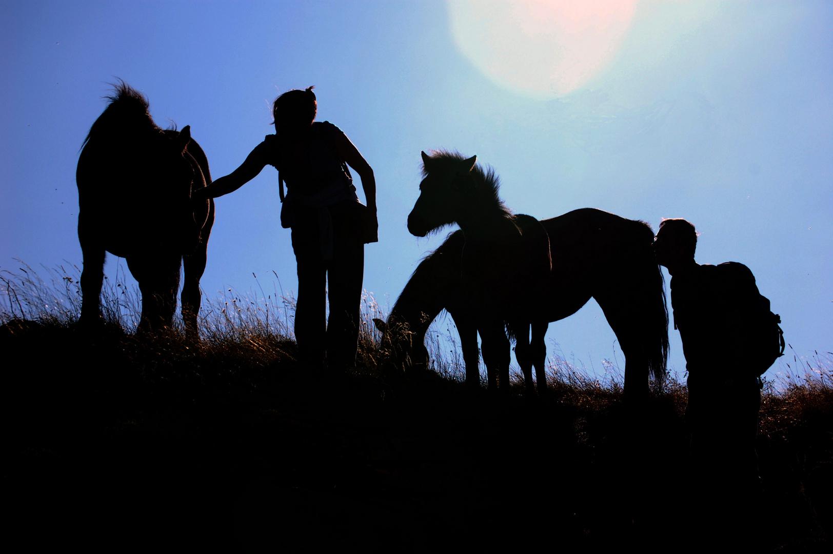 chevaux sauvages en contre jour