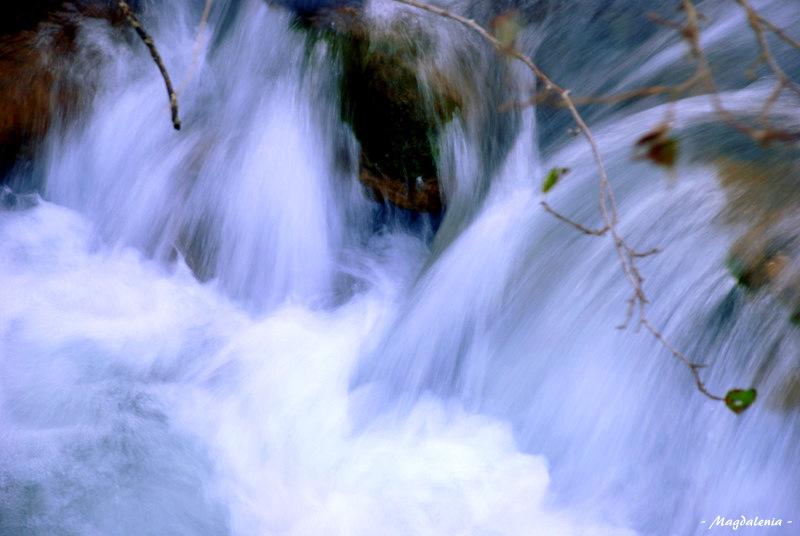 Chevelure d'eau
