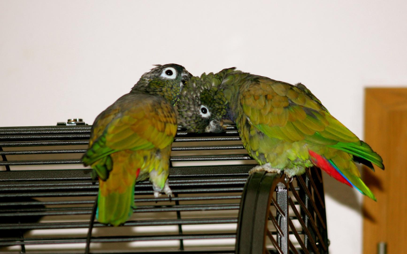 Chica & Gonzo