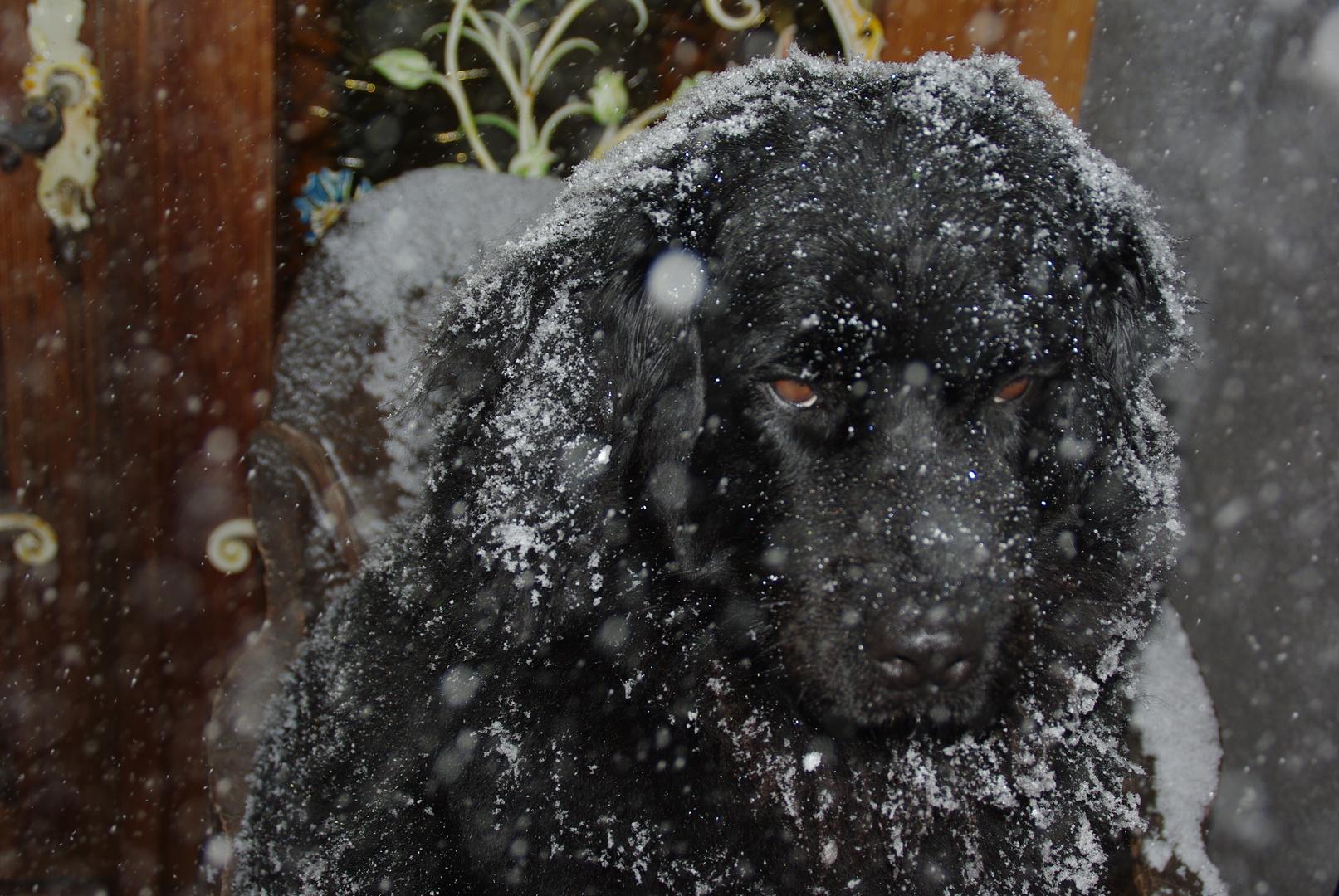 Chicca im Schneetreiben