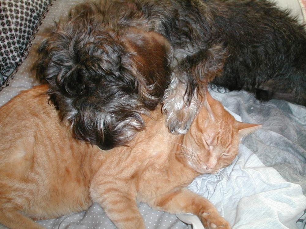 Chicco mit seiner Hauskatze Charly