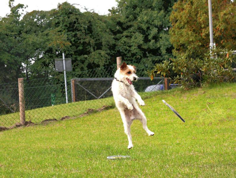 """Chico """" der fliegende Hund"""""""
