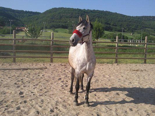 Chicuelo mon cheval