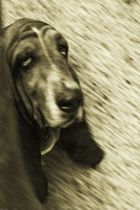 chien 2