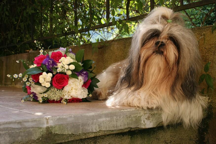 chien a marier
