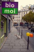 Chien à Paris