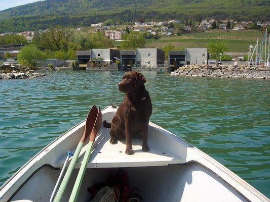 chien de pêcheur