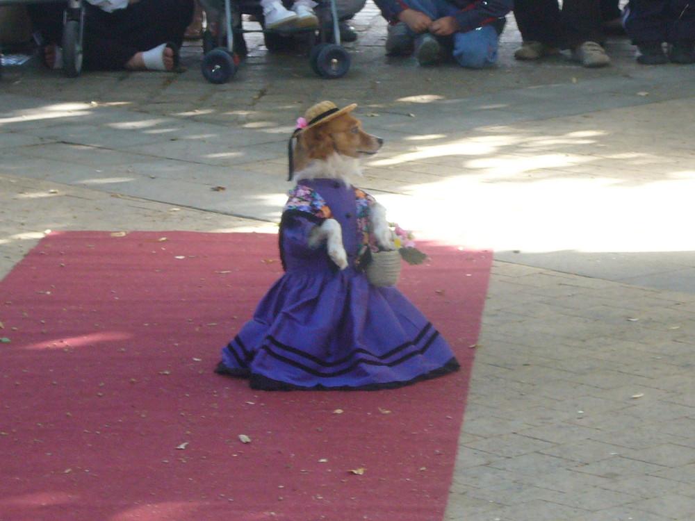 chien robe