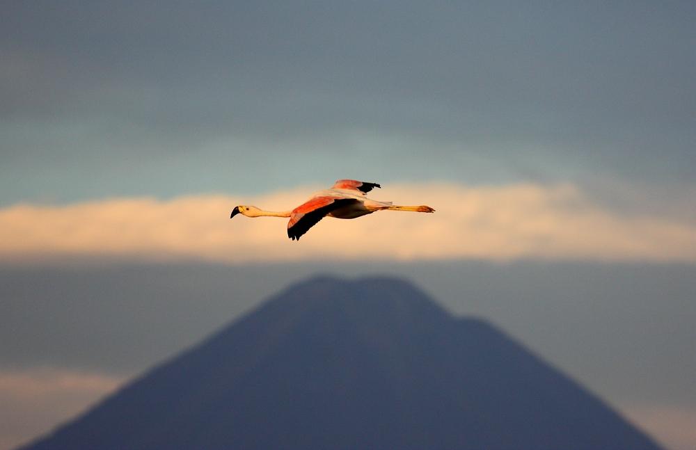 Chile (3) - Atacamawüste