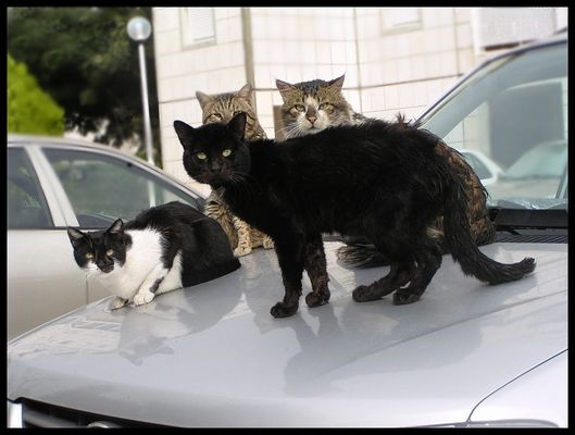 chiled cats on warm car