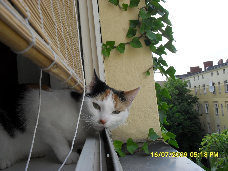 Chilla Cat
