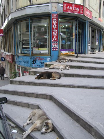 chilled dogs in the city :-)