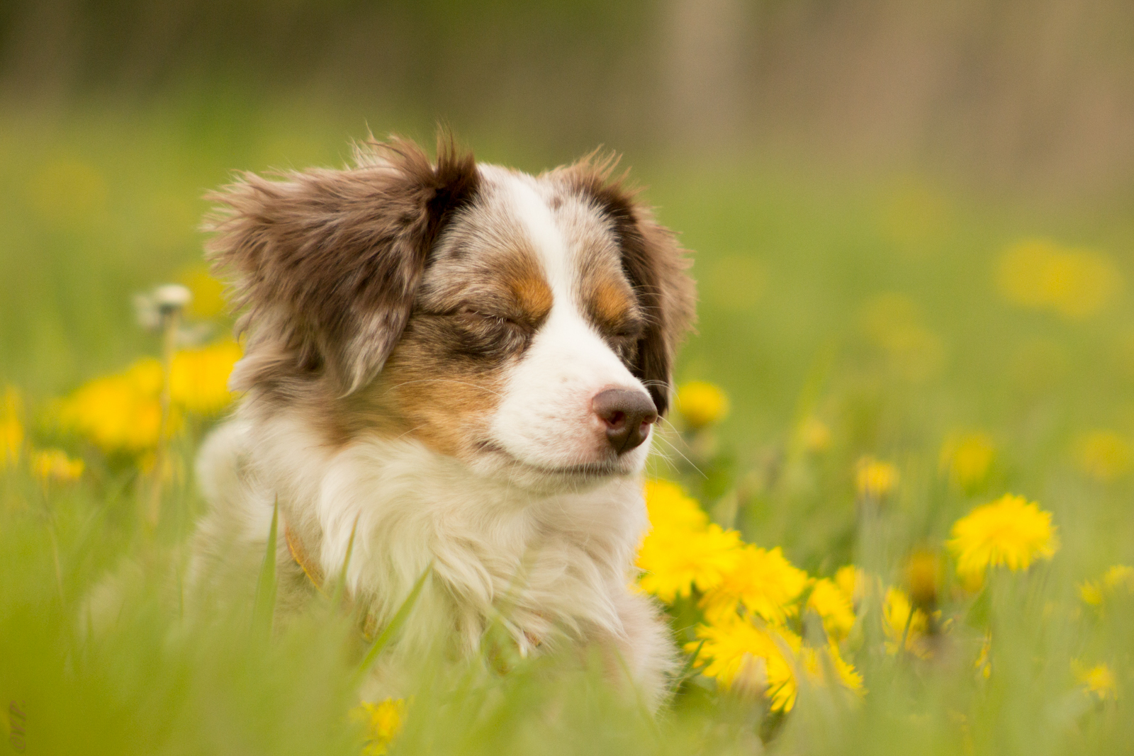 Chillen in der Blumenwiese :-)