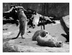 chilling animals - part II