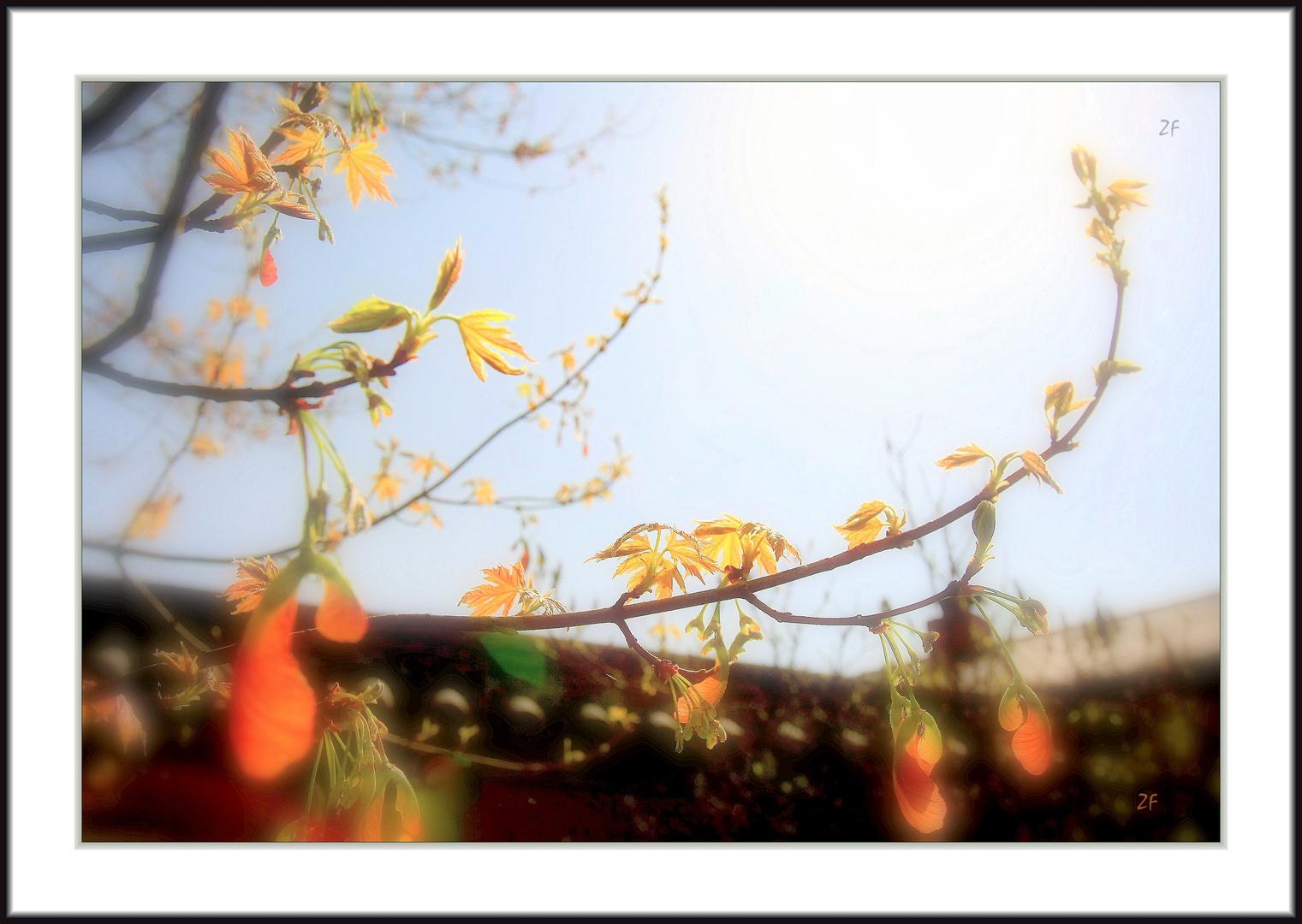 *** China Garden ***