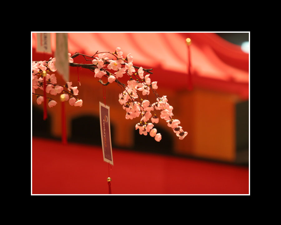 Chinese Year Eve : Sakura on The Red Roof