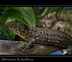 Chinesiche Krokodilschwanz Höckerechse
