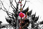Chinesische Kirschblüte